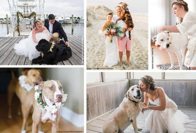 Pets in wedding ceremony