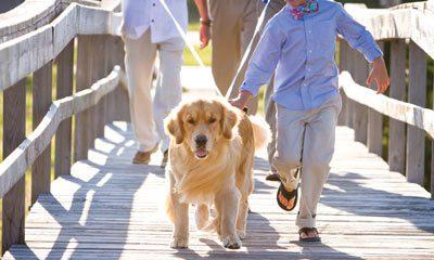dog walking aisle